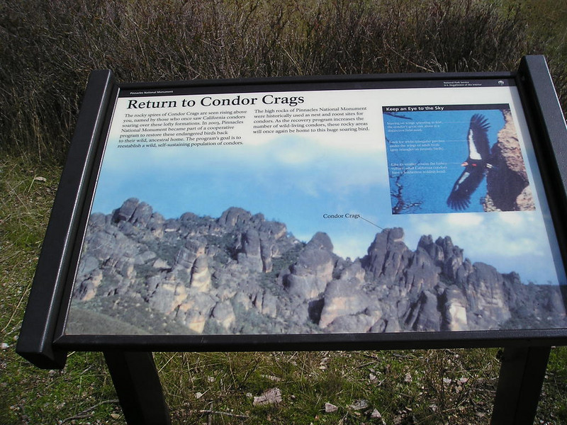 They've run a successful condor release program at Pinnacles