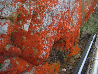 Lichen  Along the stairway to the lighthouse