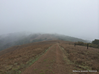 It's not going to be a good day for a view from Bald Peaks, so I turn down the Catamount trail.