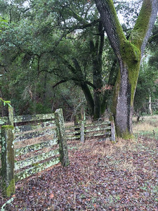 More signs of the old ranch that used to be here.