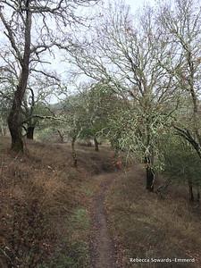 Though the mossy manzanita