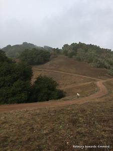Along the Bald Peaks trail.