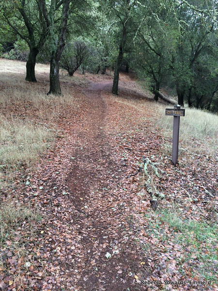 I started off up the Serpentine Loop trail amid a light drizzle.