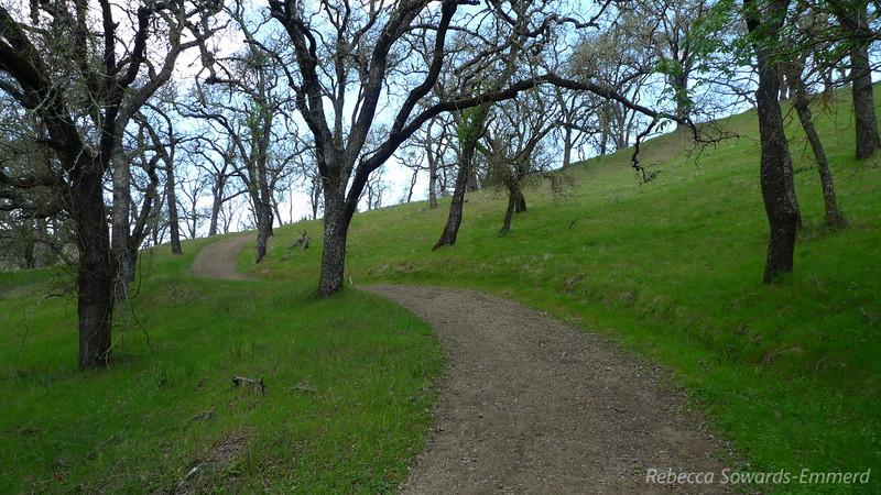 On the Javelina Trail
