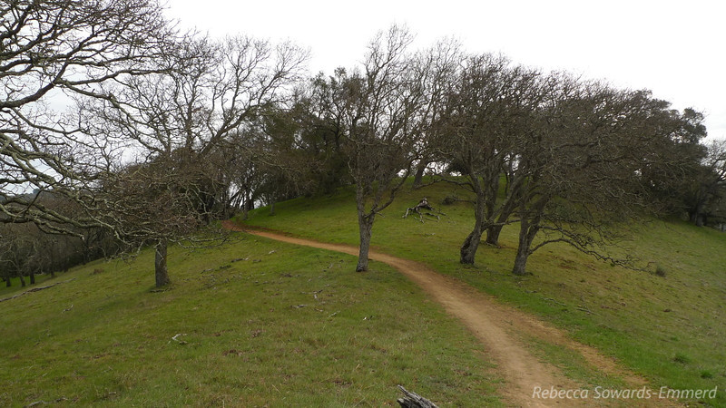 Mayfair Ranch Trail
