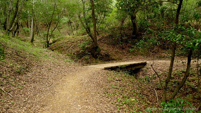 There are a few Enchanted Forest moments on this trail.