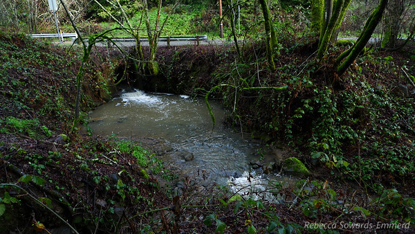 Lots of water in the creeks right now. This is at Redwood Road, the end of Chabot and where I continue on BART into Redwood Preserve.