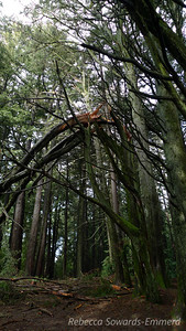 On the way up to Redwood Peak - this looked very fresh, probably from this week's storms.