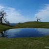 Cattle pond and neat trees