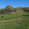 Lots of cows and cattle throughout Sunol and Ohlone.