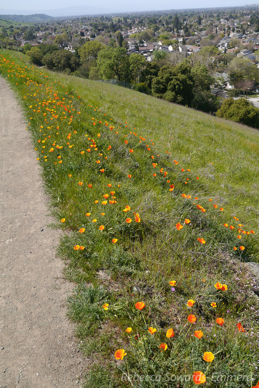 Poppies line the way.