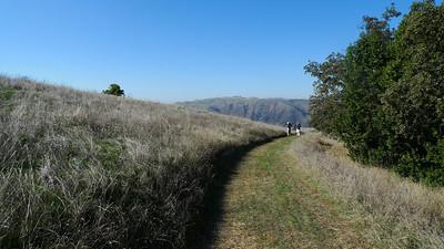 Freshly cleared trail.