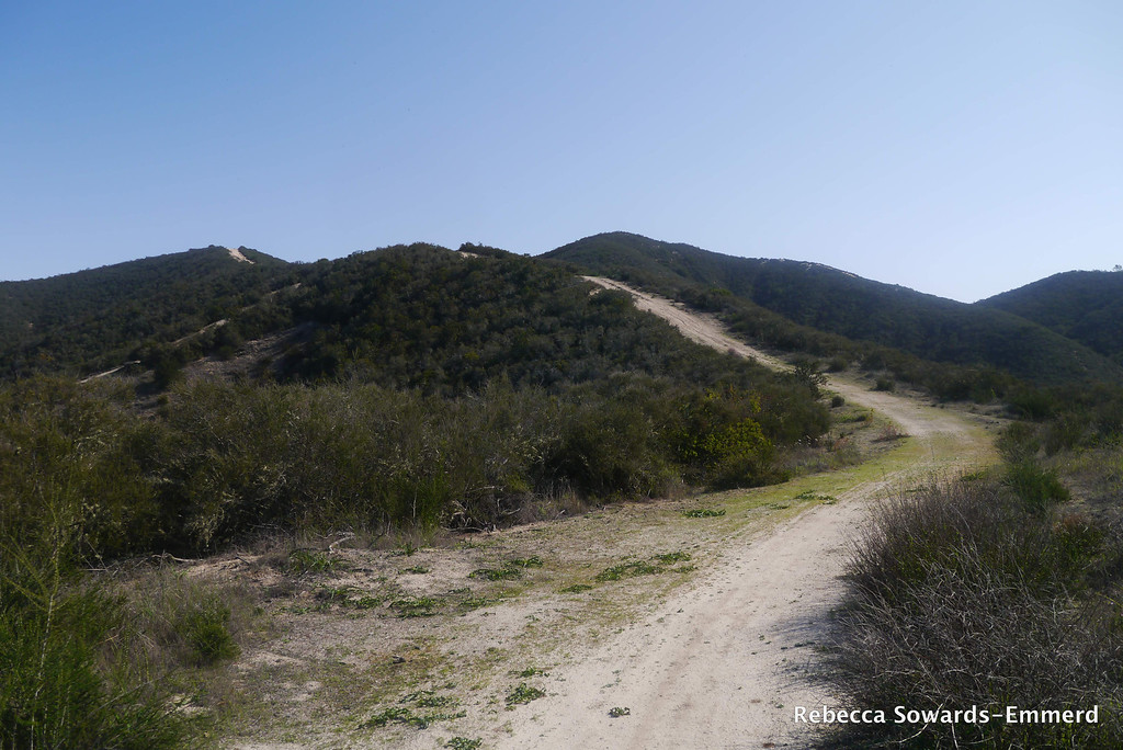 This is the way we're going for now. I once tried hiking this on a 90 degree day. Turned around on this ridge - just too hot and no shade. TOday it's nice, with a cool breeze blowing off the ocean.