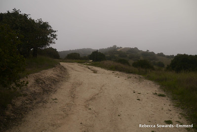 We climbed up to the Toyon ridge via this pretty steep trail.