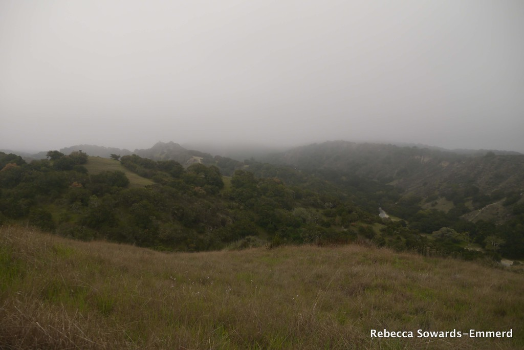 The day started off foggy and cool - perfect for hiking up an exposed ridge.
