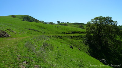 Hiking along the old ranch road. So green and pretty.