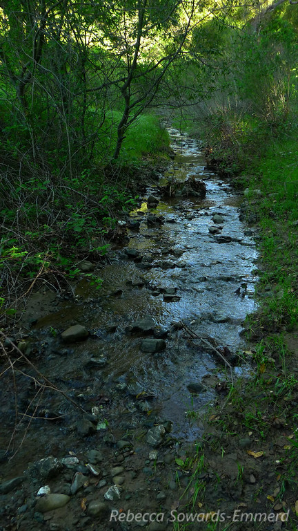 Along the Indian Creek Trail