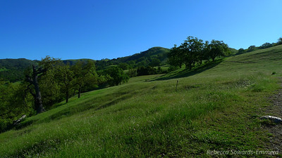 But it was a gorgeous blue sky day and the recent rains really have greened up the hills. Looks like velvet.