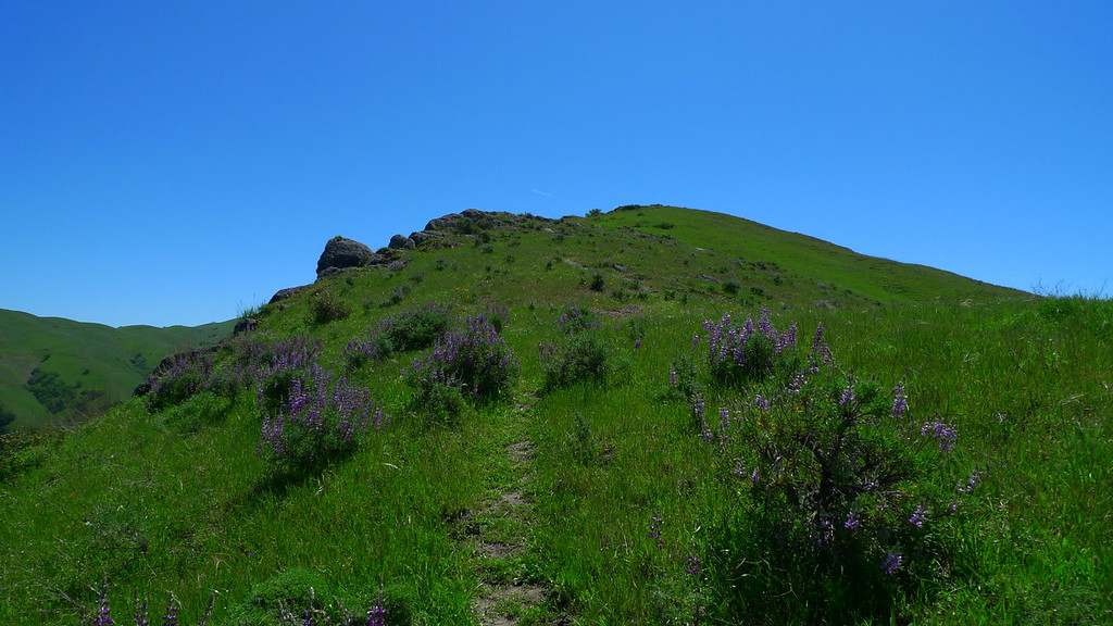 Lots of lupine on the way to the summit. Also poison oak. I've been Technu-ing ever since I got home.
