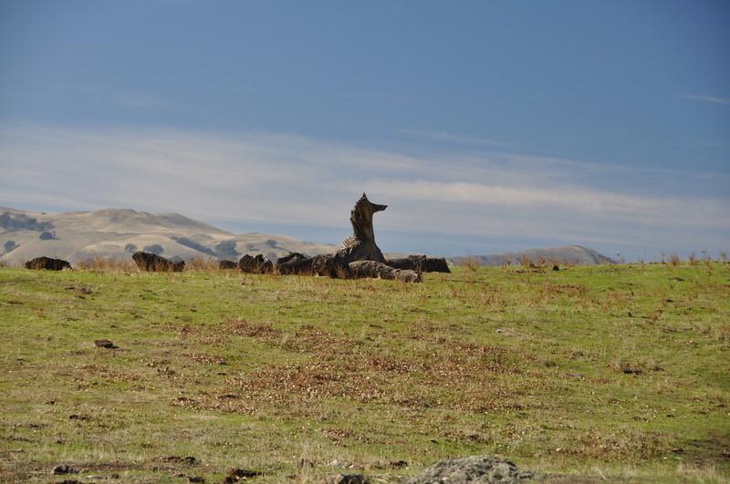 Seahorse tree