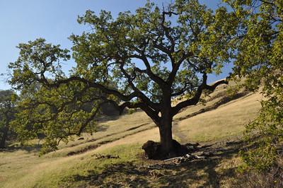 Hole tree
