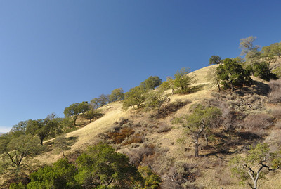 Typical East Bay hillsides