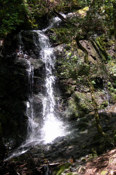 Uvas Canyon