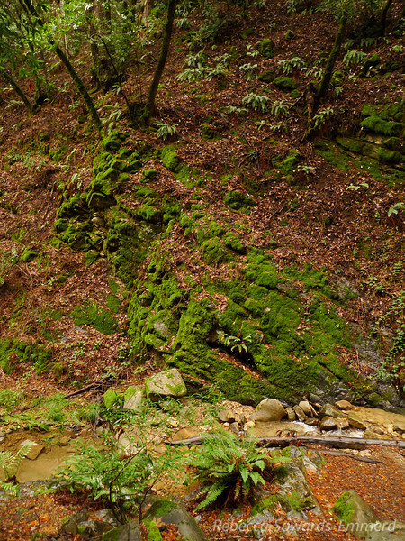 It's so damp here that everything, from the trees to the rocks, are covered in green moss. It's really bright right now thanks to the moisture.