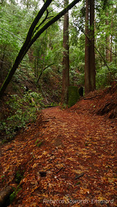 Heading up the canyon to Triple Falls. There are some enormous redwood stumps from the logging days. Most of this area is second growth.