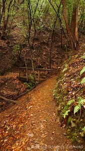 A bridge on the Contour Trail