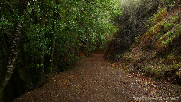 I love hiking in this kind of terrain after a rainfall. Everything is deeply colorful and lush. I'm heading into a green, drippy tunnel here.