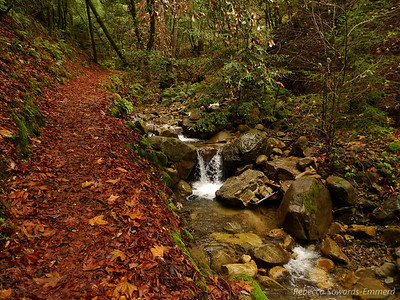 The trail follows along the creek for a while.