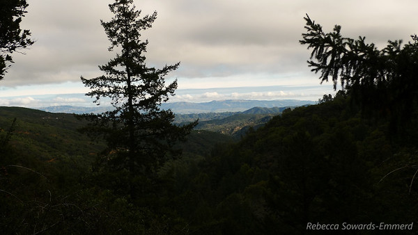I decided to take the spur trail to Knobcone Point since I'd never been up there before. It climbs about 500 feet in 0.4 miles, so it's steep but short. I get a nice peek over towards Henry Coe on the way.
