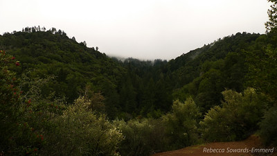 Heading down from Knobcone Point and I can see across the canyon to the non-stop fog rolling over the top of the Santa Cruz Mountains.