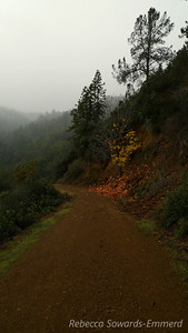 There is still a bit of fall color along the trails.