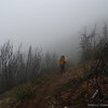Heading up the trail through the fog. This area burned in the Big Basin Complex fire last year.