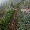 Hiking through the hillsides of lupine.