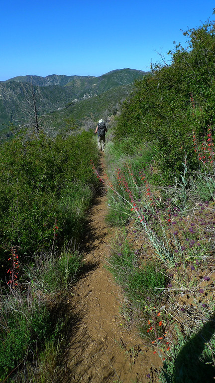 The area is recovering well from the fire several years back, but that means the poison oak is coming back.