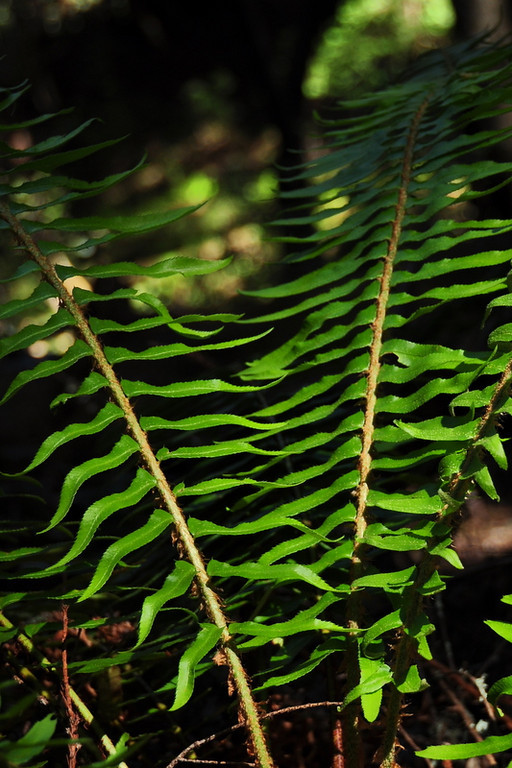 Sunlight on ferns