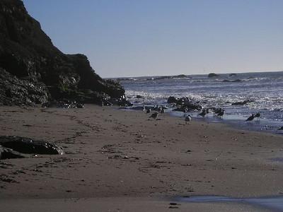 Gulls along the shore