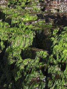 Moss at alamere falls