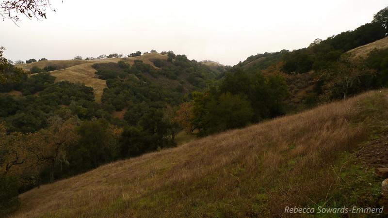 Looking towards Steer Ridge trail
