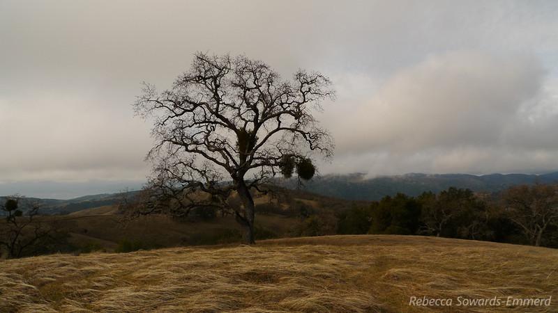 Tree on Wilson Peak