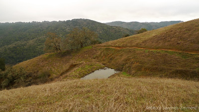 One of the many cattle/frog ponds along the way.
