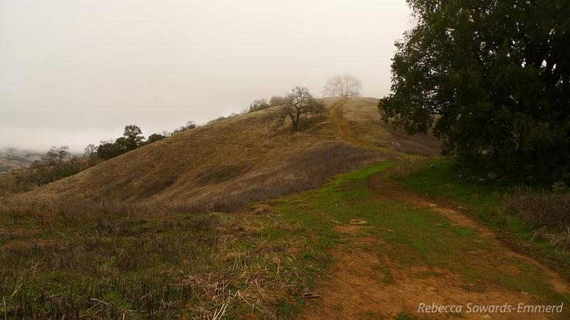 Wilson Ridge