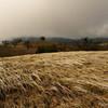 Interesting grasses on top of wilson peak