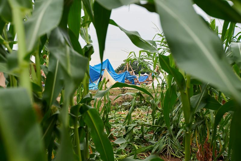 Vision depuis le champ de maïs