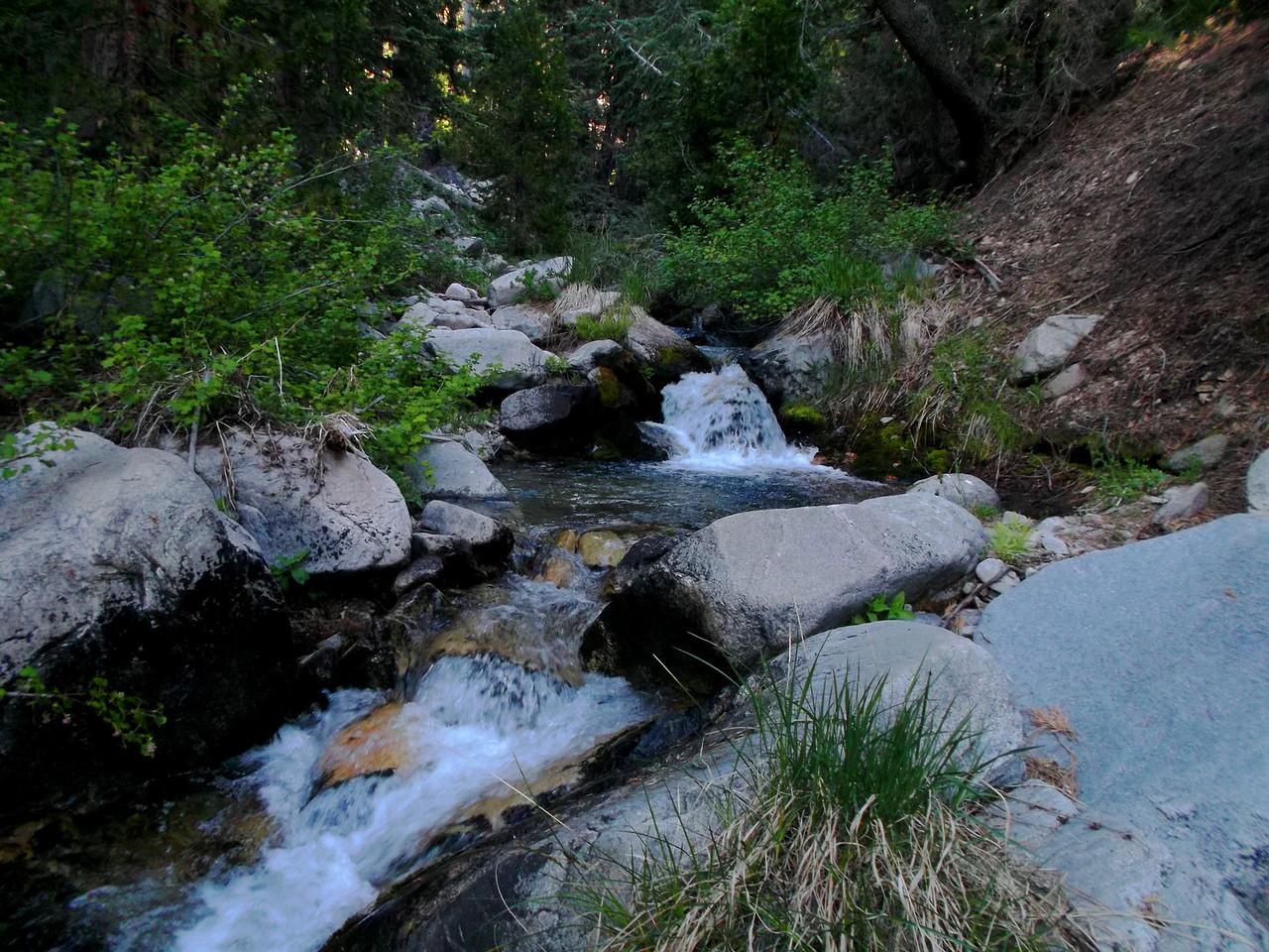 East Fork Falls Creek at Dobbs Camp