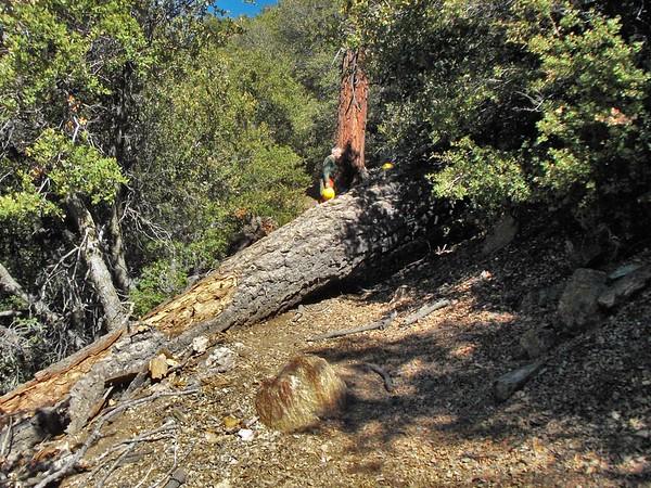 Trail Maintenance 2 Nov 2016