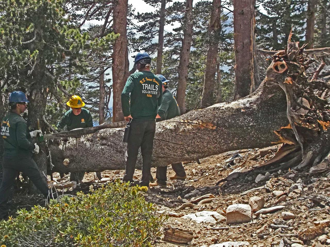 Tree 2 above High Creek Camp - before.